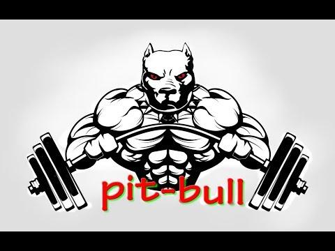 *Pit bull motivation *  2018