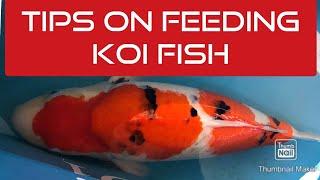 TIPS ON FEEDING KOI FISH