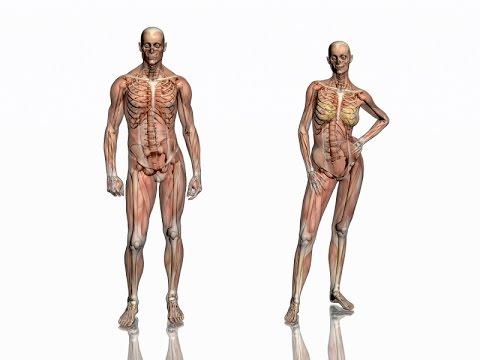 Mięśnie nie Harden