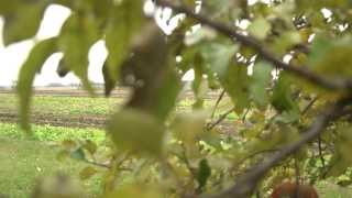 Mississippi Watershed: Perennial Bioenergy Crops