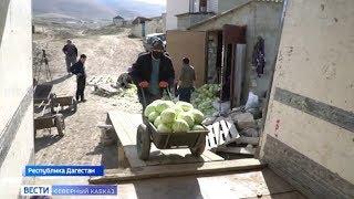 Все ради победы. Дагестанские овощеводы присоединились к акции в поддержку врачей