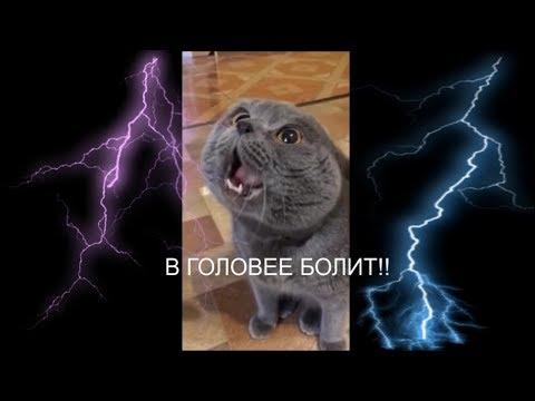 """Кот говорит: """"Голова моя болит"""""""