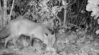 Wildlife Trail Camera - 23.11.2018