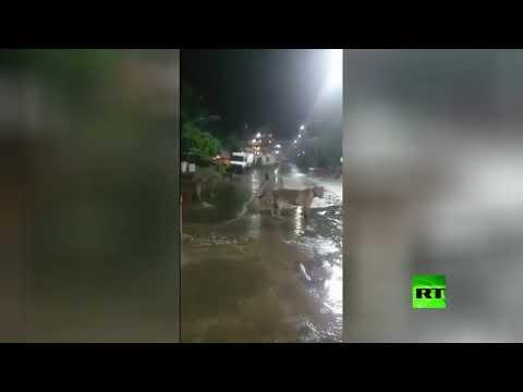 العرب اليوم - شاهد: قطيع من الأسود يقتحم بلدة هندية والكلاب تُنبه السكان بالخطر