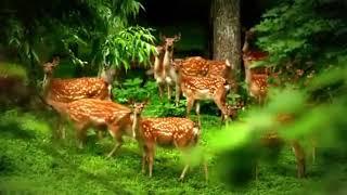 v s mobiПрирода России Nature of Russia Очень красивое видео!