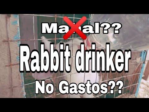 , title : 'Rabbit drinker DIY