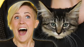 Hannah Hart Plays With Kittens While Answering Fan Questions - Video Youtube