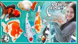 Buying New Fish at the Koi Show!