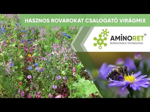 Virág parazita kezelés - 123arany.hu Paraziták kezelése hv vel
