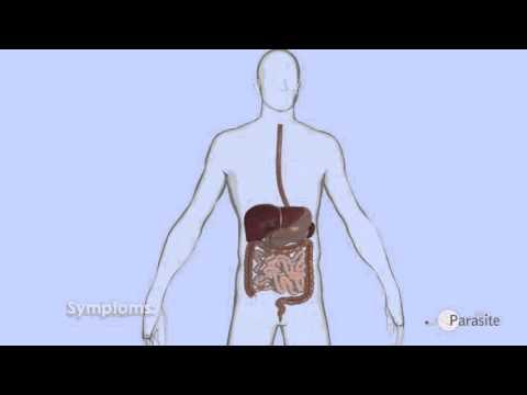 Come lyambliya in un piacere di fegato