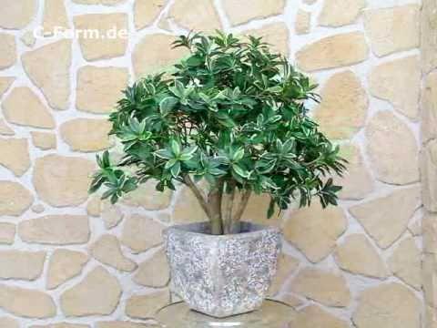 Euonymus Kunstbaum auf Naturstamm von C-Form.de!