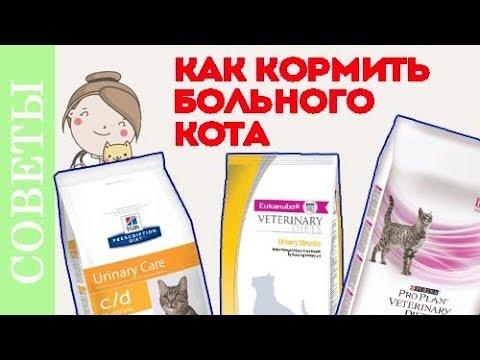 Чем кормить кота при мочекаменной болезни? Советы ветеринара.