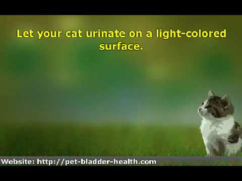 Video 8 Ways to Tell If Your Cat Has a Urinary Tract Infection