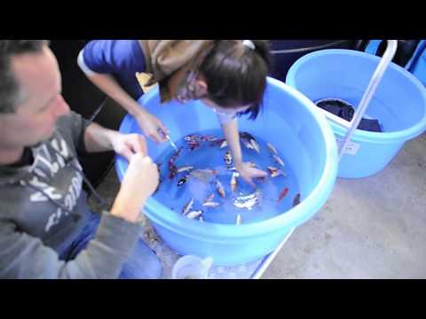 Die Merkmale der Würmer bei den Kindern die 1 5 Jahre