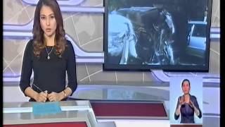 Сразу две крупные аварии произошли в Алматы и Южно-Казахстанской области