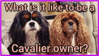 Whats It Like To Have Cavalier King Charles Spaniels?