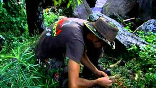 Strain Hunters Malawi Expedition by Green House Seed Company