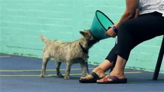 3 best dog trainers in cardiff uk  expert recommendations