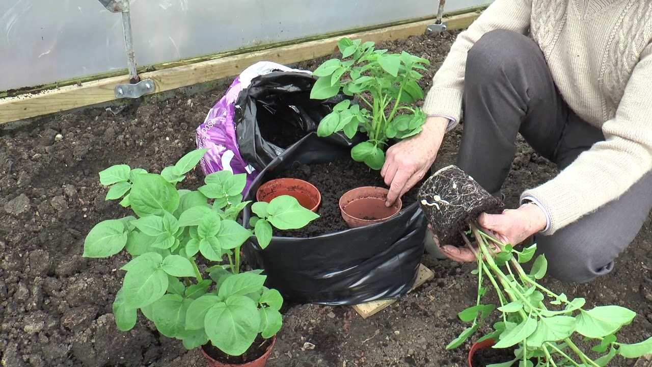 Grow Your Own Potato Competition