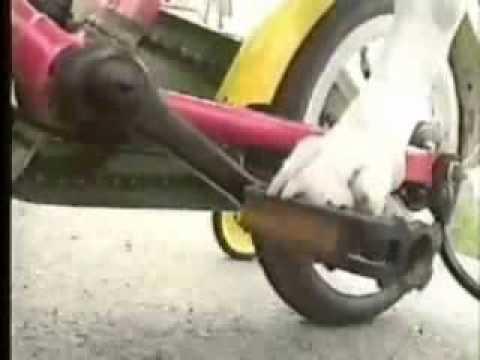 כלבים ושיגועים - לקט משעשע!