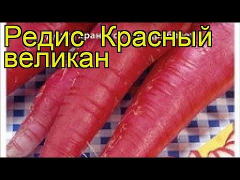 Редис Красный великан. Краткий обзор, описание характеристик, где купить семена raphanus sativus