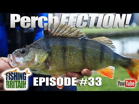 PerchFECTION – Fishing Britain, episode 33