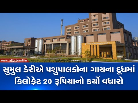 Surat: Sumul dairy increases cow milk procurement prices by Rs.20/ kg fat | TV9News