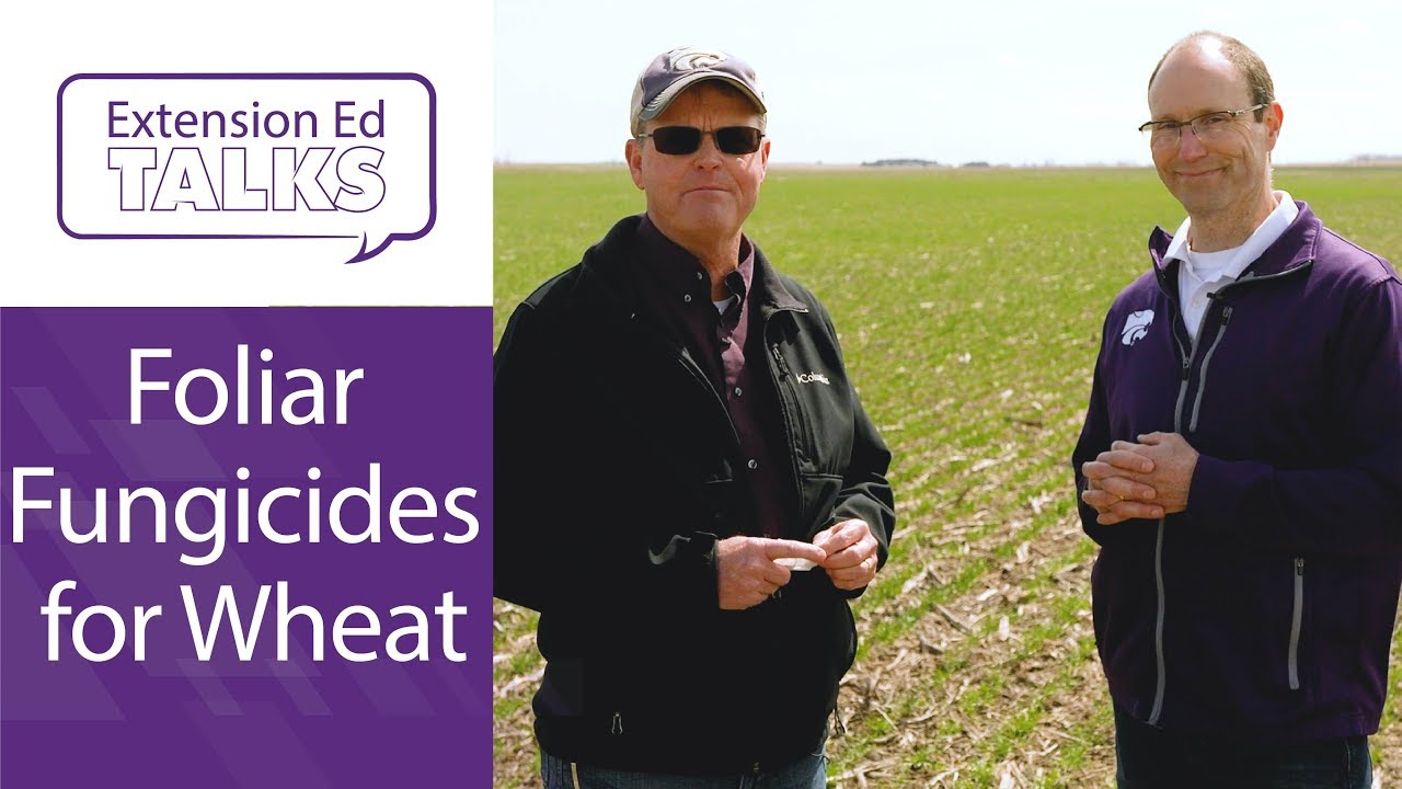 Foliar Fungicides for Wheat