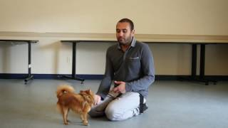 Tip Tuesday Video - How to approach a dog for petting