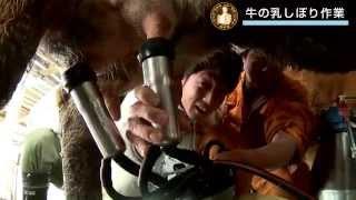 Vol.7岩泉町「差畑しあわせ牧場」篇