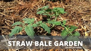 How to Start a Straw Bale Garden