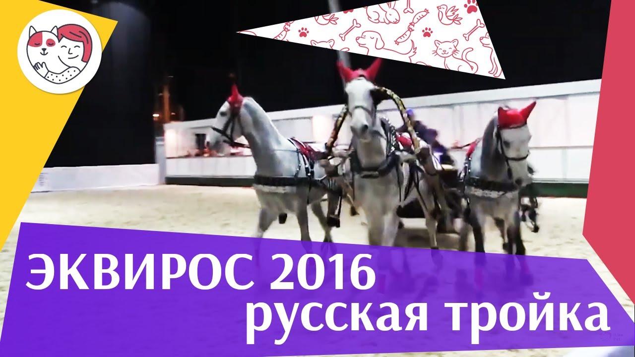 ЛОШАДИ Русская тройка ЭКВИРОС 2016 на ilikepet
