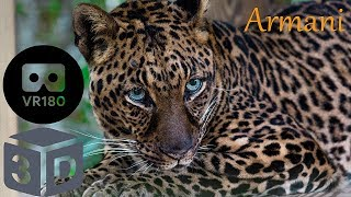 Meet Armani Leopard And The Lesson We Learned