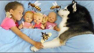 Sofia and a collection of new series about a Dog and Favorite Toys