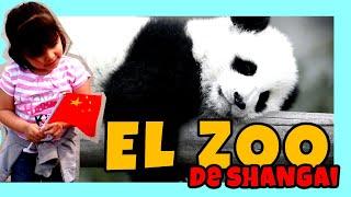 preview picture of video 'El zoológico de  Shangai [Viajar a china con niños Capítulo 13]'