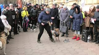 #догтаун. Собачники Одессы. ГУ НП Одессы. Акция. Танцуем. Коваль А. Собаки. Щенки. Аджилити. Dog.