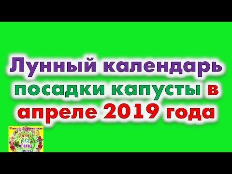 Когда сажать рассаду капусты в 2019 году по лунному календарю