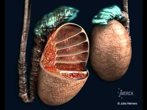 Walnut and prostate cancer