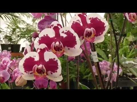 Orchids in Thrissur - Latest Price & Mandi Rates from