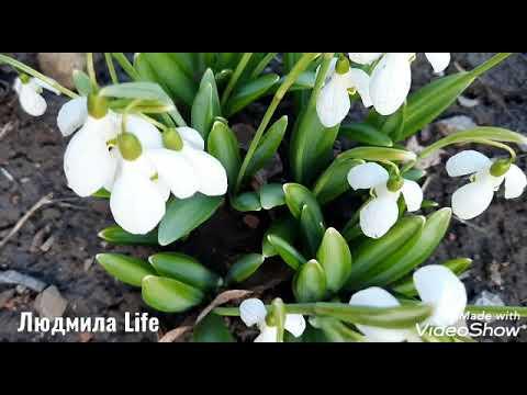 Весеннее небо и цветы.Релакс.Красивая музыка.