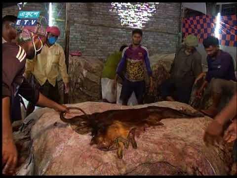 চামড়ার কাঙ্খিত দাম পায়নি মৌসুমী ব্যবসায়ীরা | ETV News