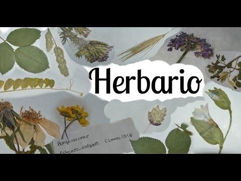 Como hacer un herbario Parte 1 I Recolectar, prensar y secar