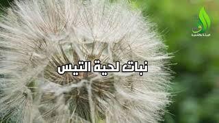نباتات أسماءها مستوحاة من ...