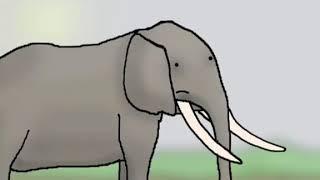 The Elephants went HA