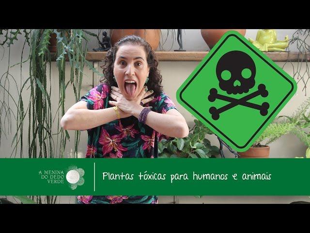 Wymowa wideo od tinhorão na Portugalski