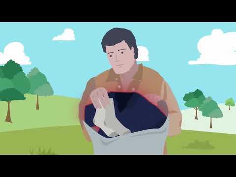 Dịch tả heo châu phi
