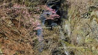 小中大滝の動画素材, 4K写真素材