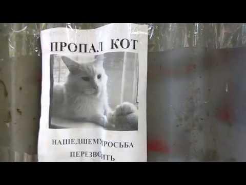 Забавная оптическая иллюзия с котом на объявлении о пропаже