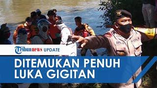 Detik-detik Evakuasi Wanita yang Tewas Diterkam Buaya, Banyak Bekas Gigitan dan Luka di Perut