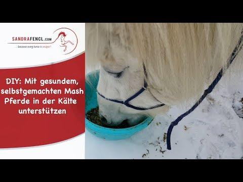DIY: Mit gesundem, selbstgemachten Mash Pferde in der Kälte unterstützen!